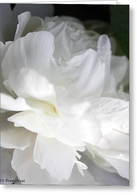 Greeting Card featuring the photograph Passionate About Peonies by Penny Hunt