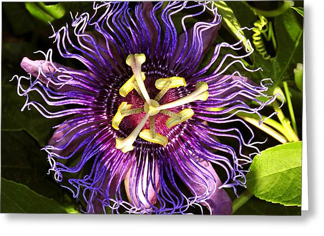 Passionflower Greeting Card by David Lee Thompson