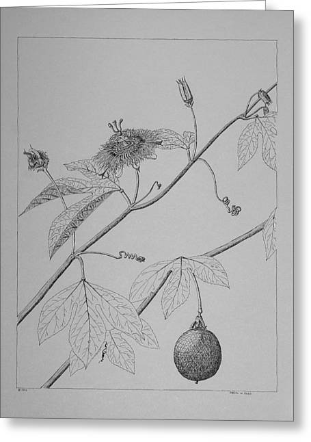 Greeting Card featuring the drawing Passionflower Vine by Daniel Reed