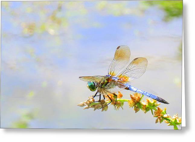 Greeting Card featuring the photograph Pastel Dragonfly by Deborah Smith
