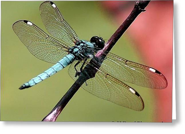 Pastel Dragonfly Greeting Card by Heather  Boyd