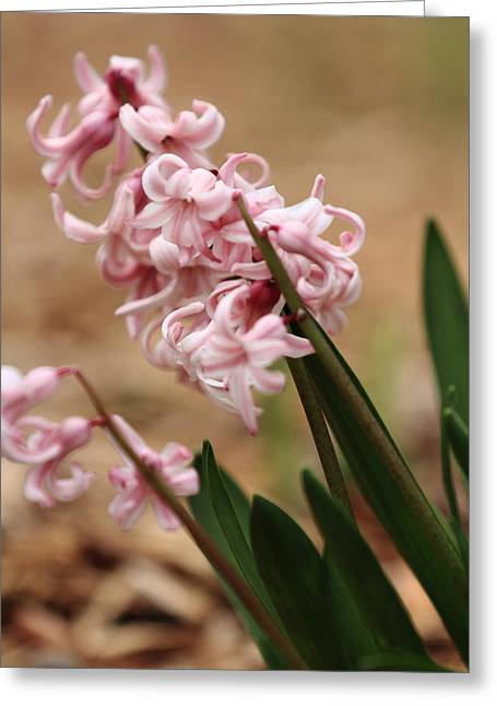 Greeting Card featuring the photograph Pastel Flowers by Coby Cooper