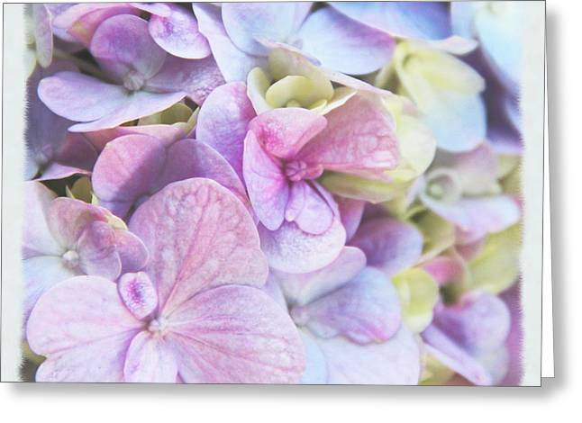 Greeting Card featuring the photograph Pastel Hydrangeas - Square by Kerri Ligatich