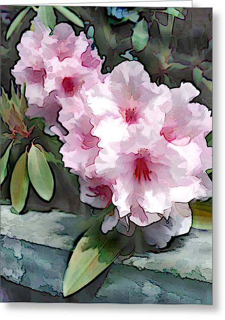 Pastel Pink Rhodendron At Garden Wall Greeting Card
