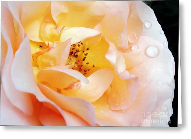Pastel Rose Greeting Card by Kaye Menner