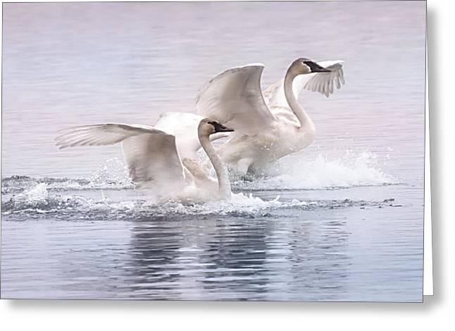 Pastel Swans Greeting Card