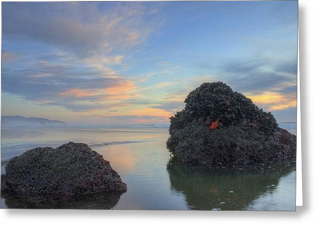 Pastel Tidepool Greeting Card
