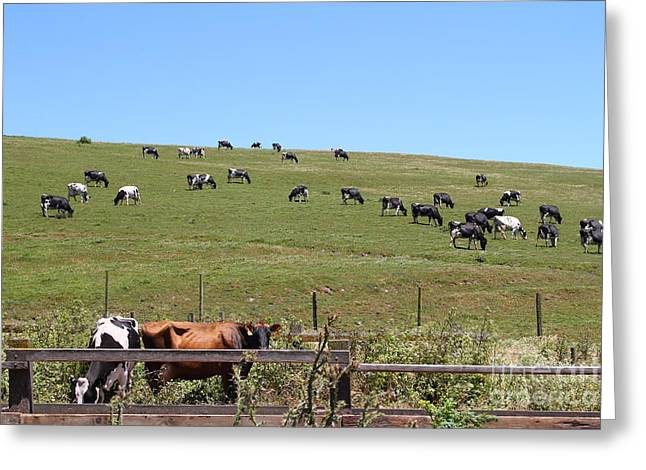Pastoral Landscape Of Point Reyes California . 7d15962 Greeting Card