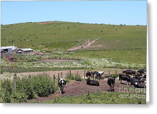 Pastoral Landscape Of Point Reyes California . 7d15964 Greeting Card