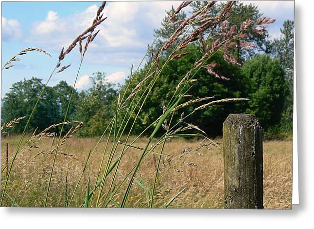 Greeting Card featuring the photograph Pasture Grass by Pamela Patch