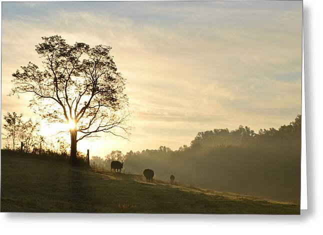 Pasture Sunrise Greeting Card by JD Grimes
