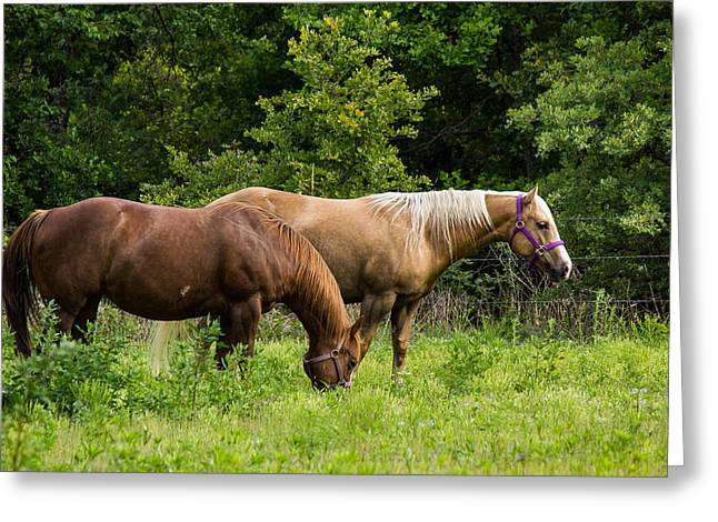 Pasture Time Greeting Card by Doug Long