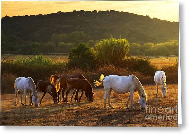 Pasturing Horses Greeting Card by Carlos Caetano