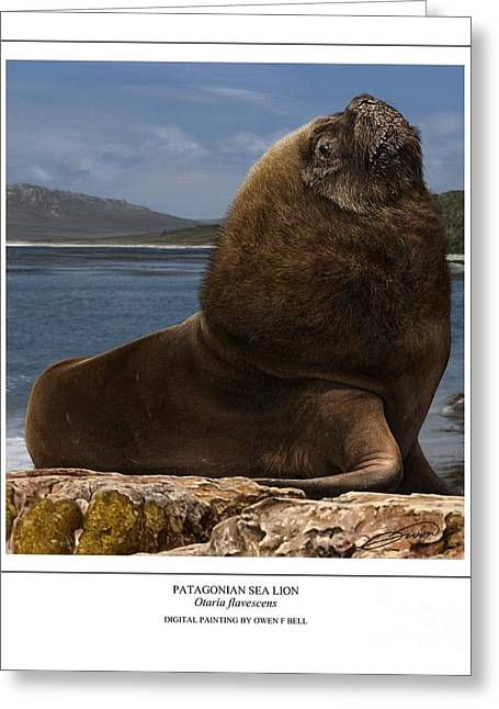 Patagonian Sea Lion Bull Greeting Card by Owen Bell