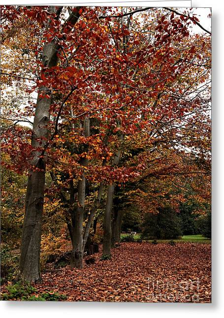 Path Of Leaves Greeting Card by John Rizzuto