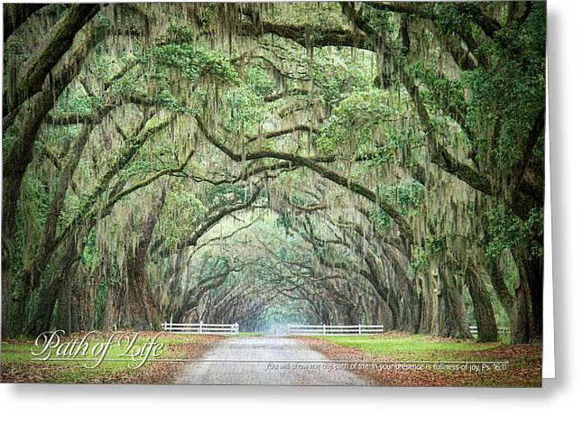 Path Of Life 1 Greeting Card by Mary Hershberger