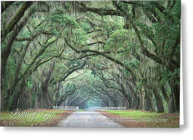 Path Of Life 2 Greeting Card by Mary Hershberger