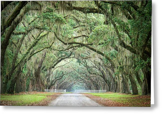 Path Of Life 3 Greeting Card by Mary Hershberger