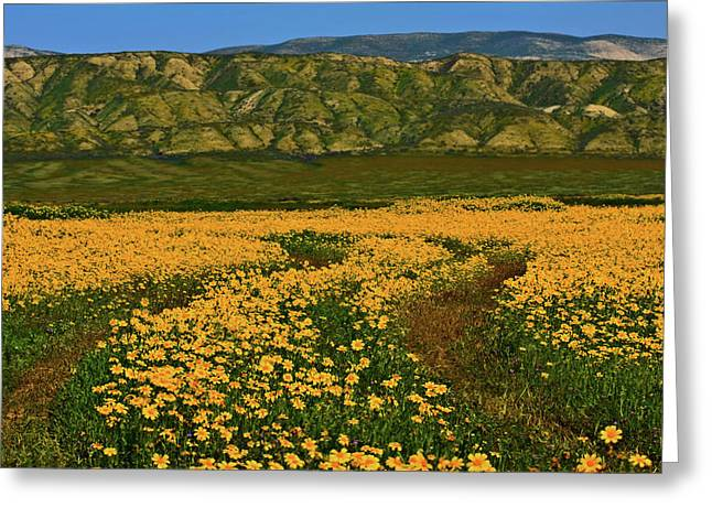 Path Through The Wildflowers Greeting Card