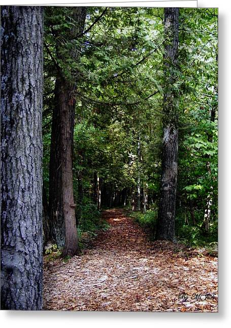 Pathway Greeting Card by Ms Judi