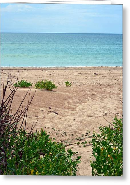 Pathway To The Beach Greeting Card by Sandi OReilly