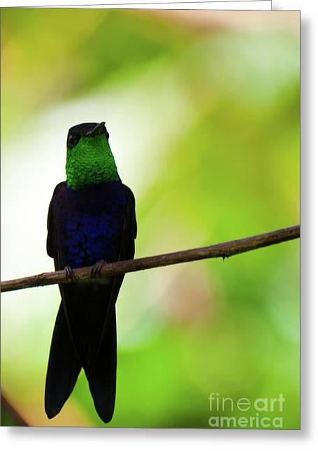 Patient Hummingbird Greeting Card
