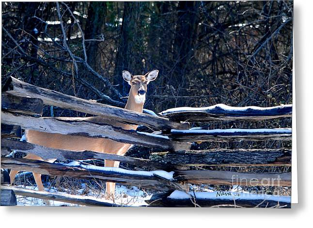 Greeting Card featuring the photograph Pea Ridge Battlefield Deer by Nava Thompson
