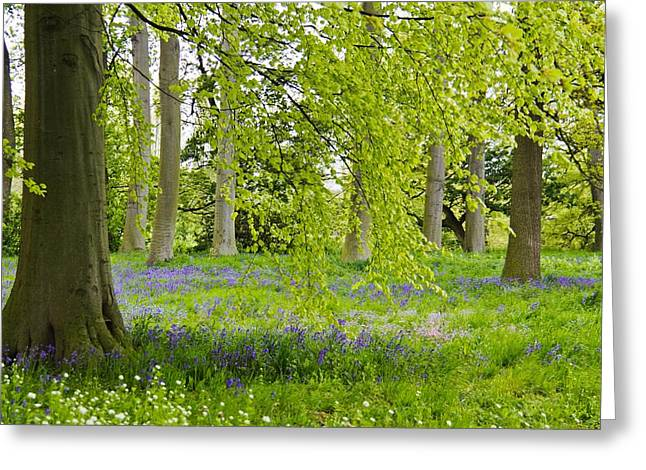 Peaceful Meadow 2 Greeting Card by Mary Hershberger