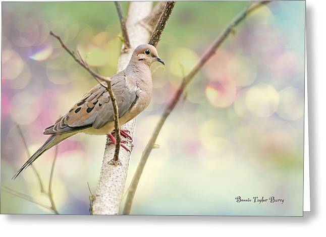 Peaceful Mourning Dove Greeting Card by Bonnie Barry