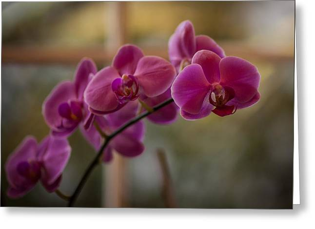 Peaceful Orchids Greeting Card by Mike Reid