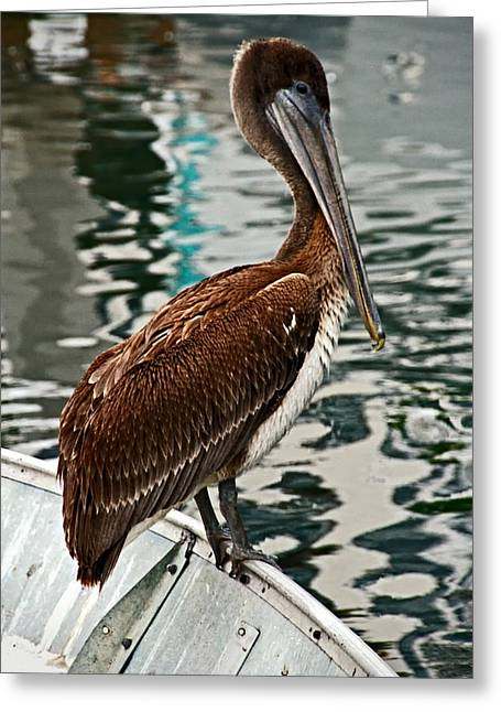 Peaceful Pelican Place Greeting Card by Donna Pagakis