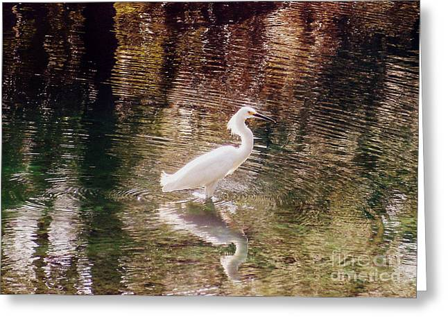 Greeting Card featuring the photograph Peaceful Waters by Lydia Holly