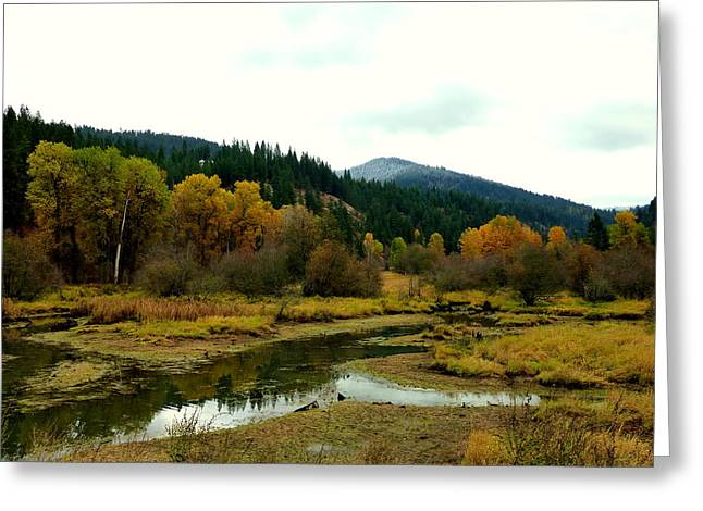 Peaceful Waters Near Coeur D'alene Greeting Card by Cindy Wright