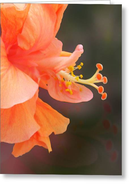 Peach Glow Greeting Card by Ginny Schmidt
