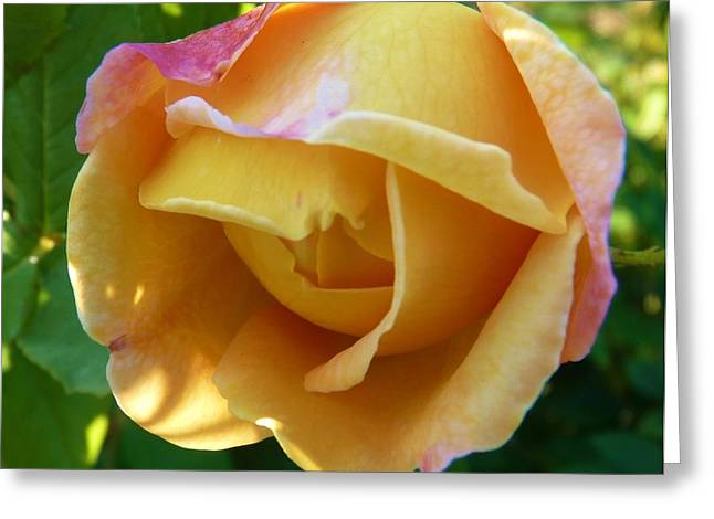Peach Rose Greeting Card by Jeanette Oberholtzer