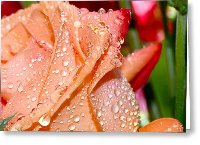 Peach Rose Greeting Card by Michelle Armstrong