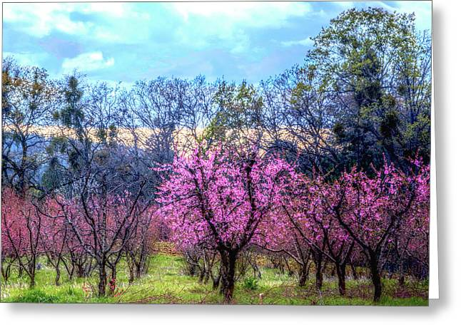Peachy Blossum Scene2 Greeting Card