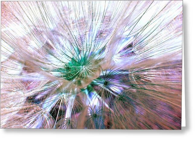 Peacock Dandelion - Macro Photography Greeting Card by Marianna Mills