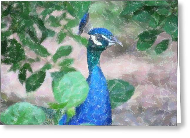 Greeting Card featuring the photograph Peacock by Donna  Smith