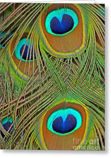 Peacock Feather 2 Greeting Card