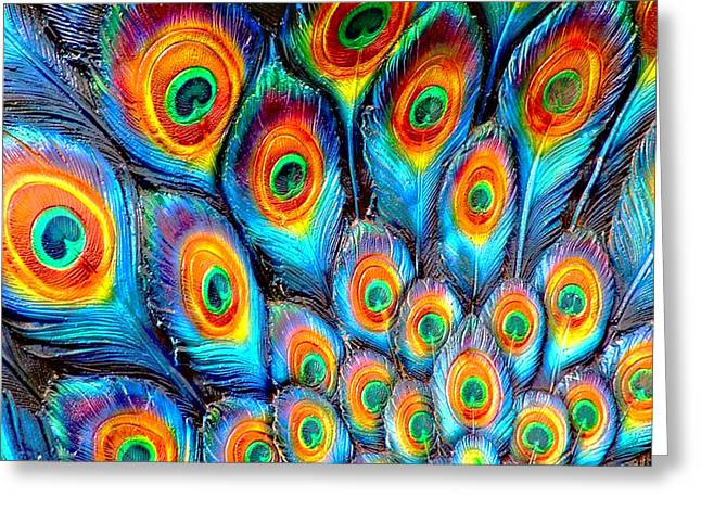 Peacock Feathers Greeting Card by Helen Stapleton