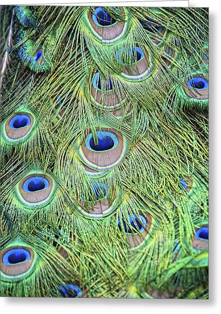 Peacock Feathers Greeting Card by Jen Morrison