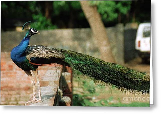 Peacock Greeting Card by Igor Fedonyuk