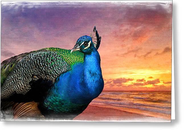 Peacock In Paradise Greeting Card by Debra and Dave Vanderlaan