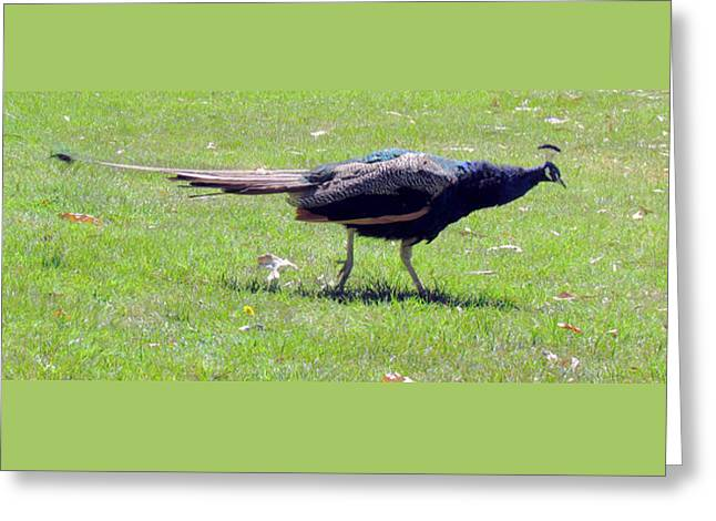 Peacock Striding Greeting Card