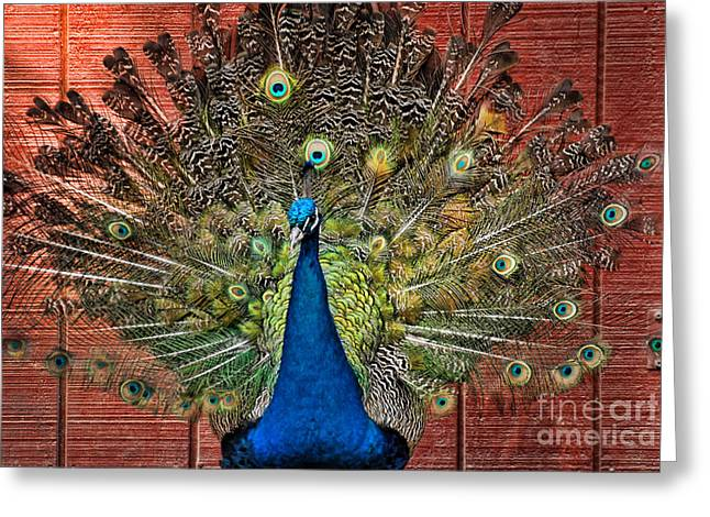 Peacock Tails Greeting Card by Paul Ward