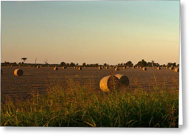 Peanut Field Bales At Dawn 1 Greeting Card by Douglas Barnett