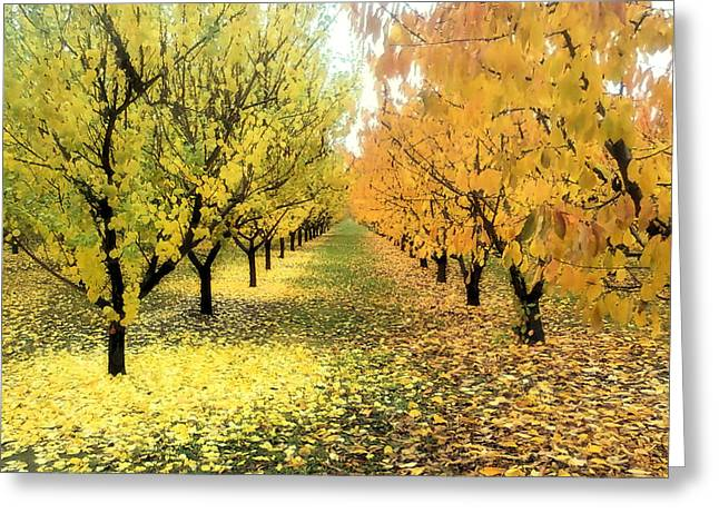 Pear Orchard In Fall Greeting Card by Katie Wing Vigil