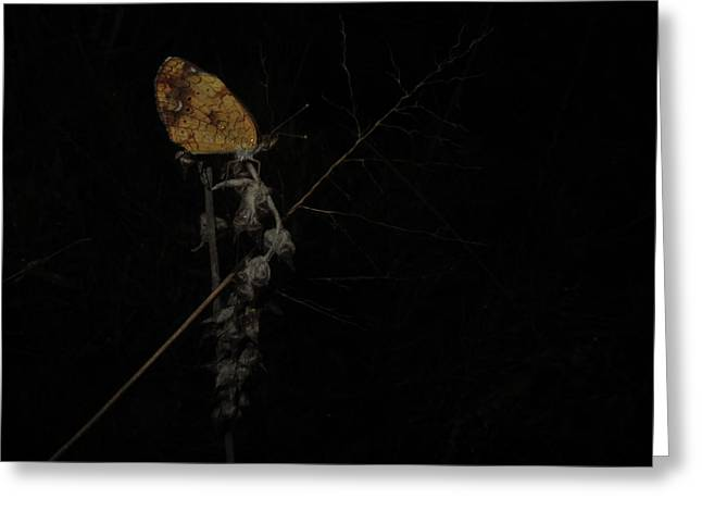 Pearly Crescentspot Butterfly Greeting Card by Donna Brown