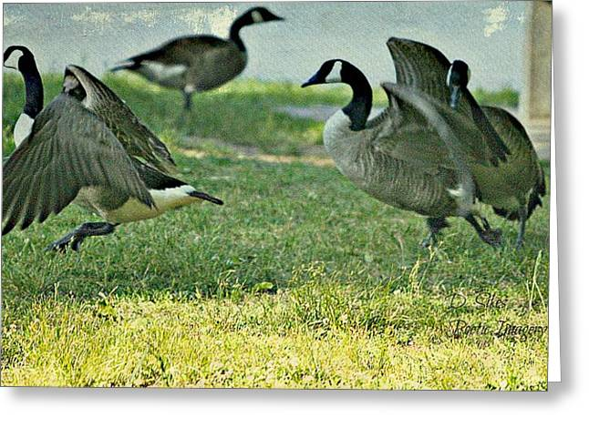 Pecking Order Greeting Card by Debbie Sikes